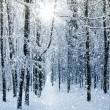 冬 (640x640)